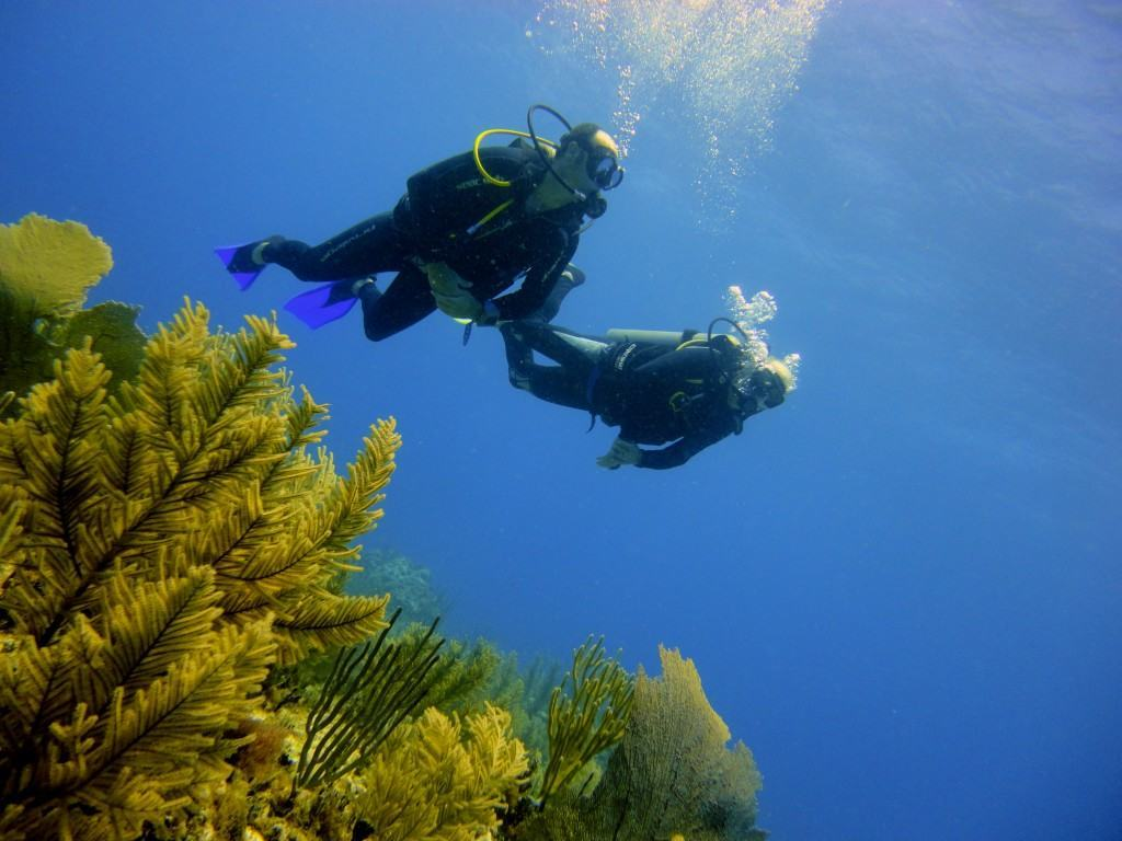 DSD descubre el buceo en el segundo arecife más grande del mundo