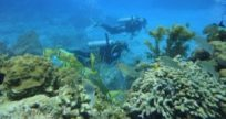 Fun diving on the coral reef in the Caribbean Mexico