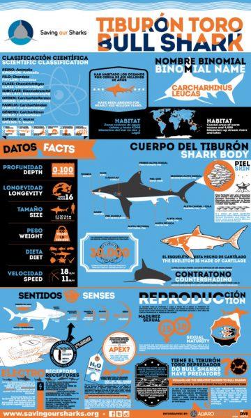 bull sharks